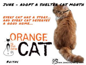 adopt a shelter cat