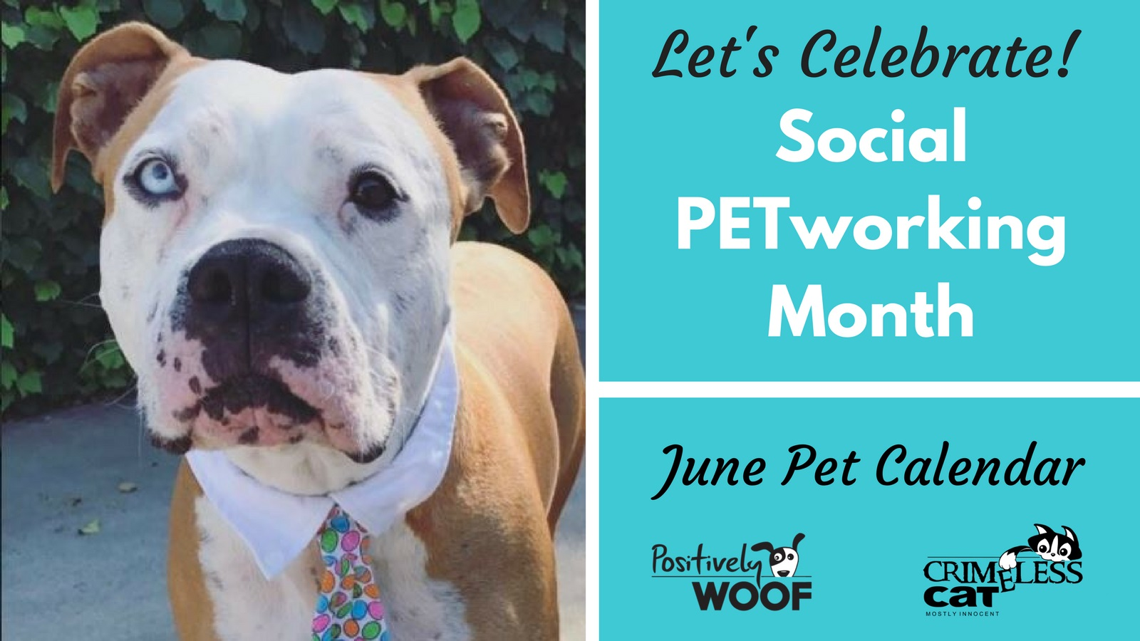 social-petworking-month