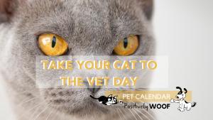 take cat to vet day