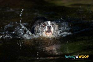 hurricane harvey dog