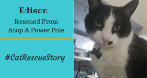 Cat Rescue Story