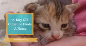 cat rescue story cutie pie