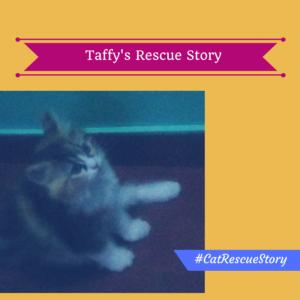 cat rescue story taffy