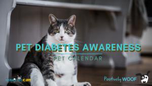 pet diabetes awareness