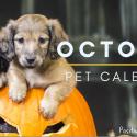 october pet calendar