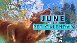 juen pet calendar