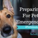 prepare for pet emergencies