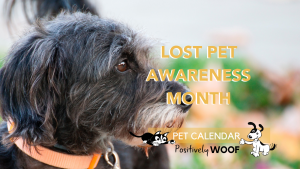 lost pet awareness month