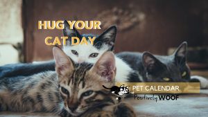 hug your cat but